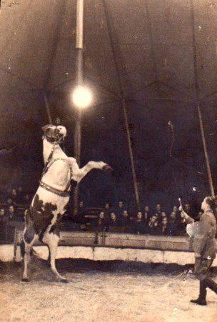 paardentemmer in de circusmanège