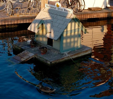 Waterboat Duck House Boston