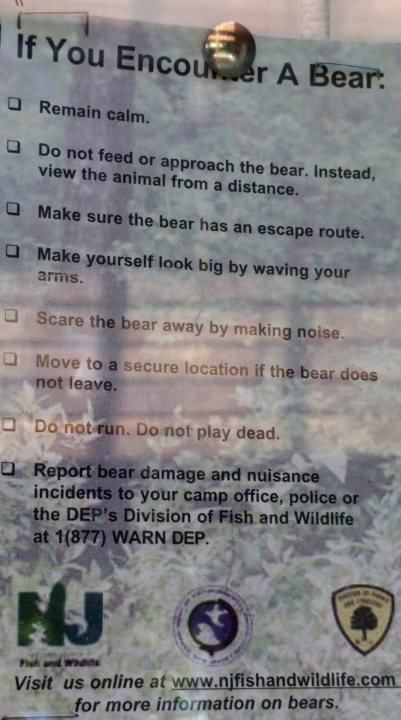 What-to-do-if-you-encounter-a-bear