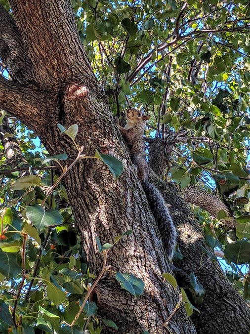 eekhoorn-op-boom