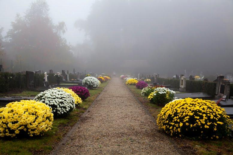 chrysanten kerkhof