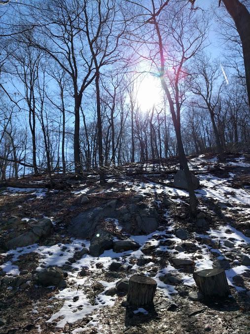 Bear Mountain bomen - sneeuw - zon - tegenlicht