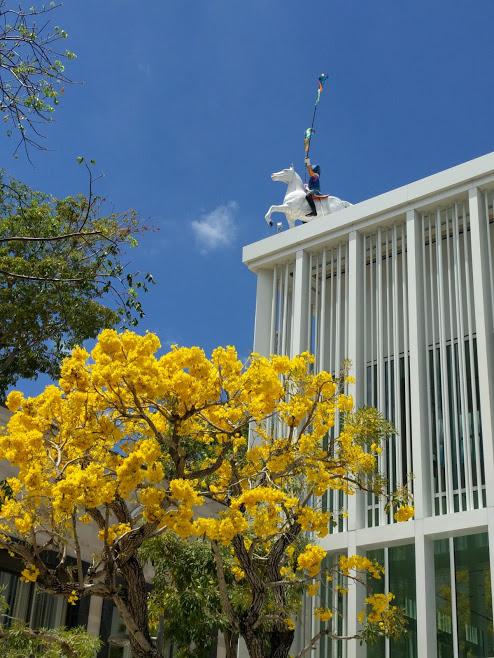 Design District Miami, ruiter te paard op dak winkel, boom met gele bloesems ervoor