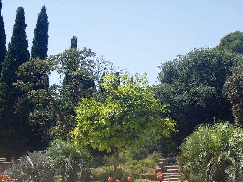Botanische tuin Montpellier