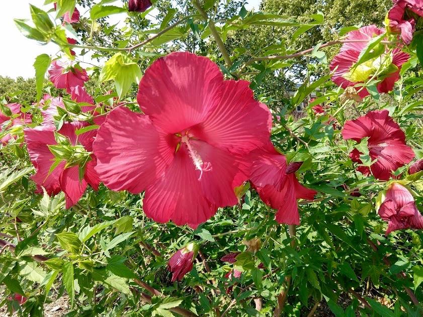 Bloemen op Governors Island