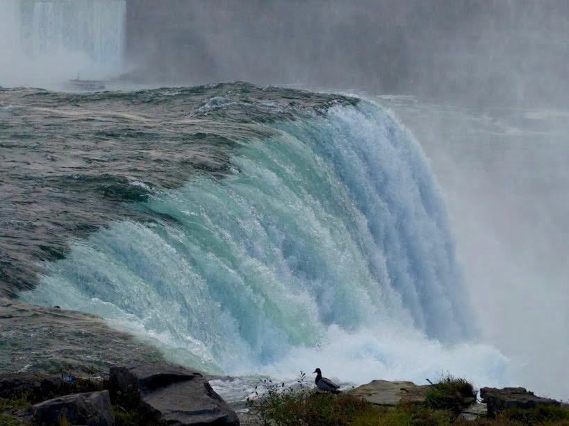 Niagara Falls met eendje