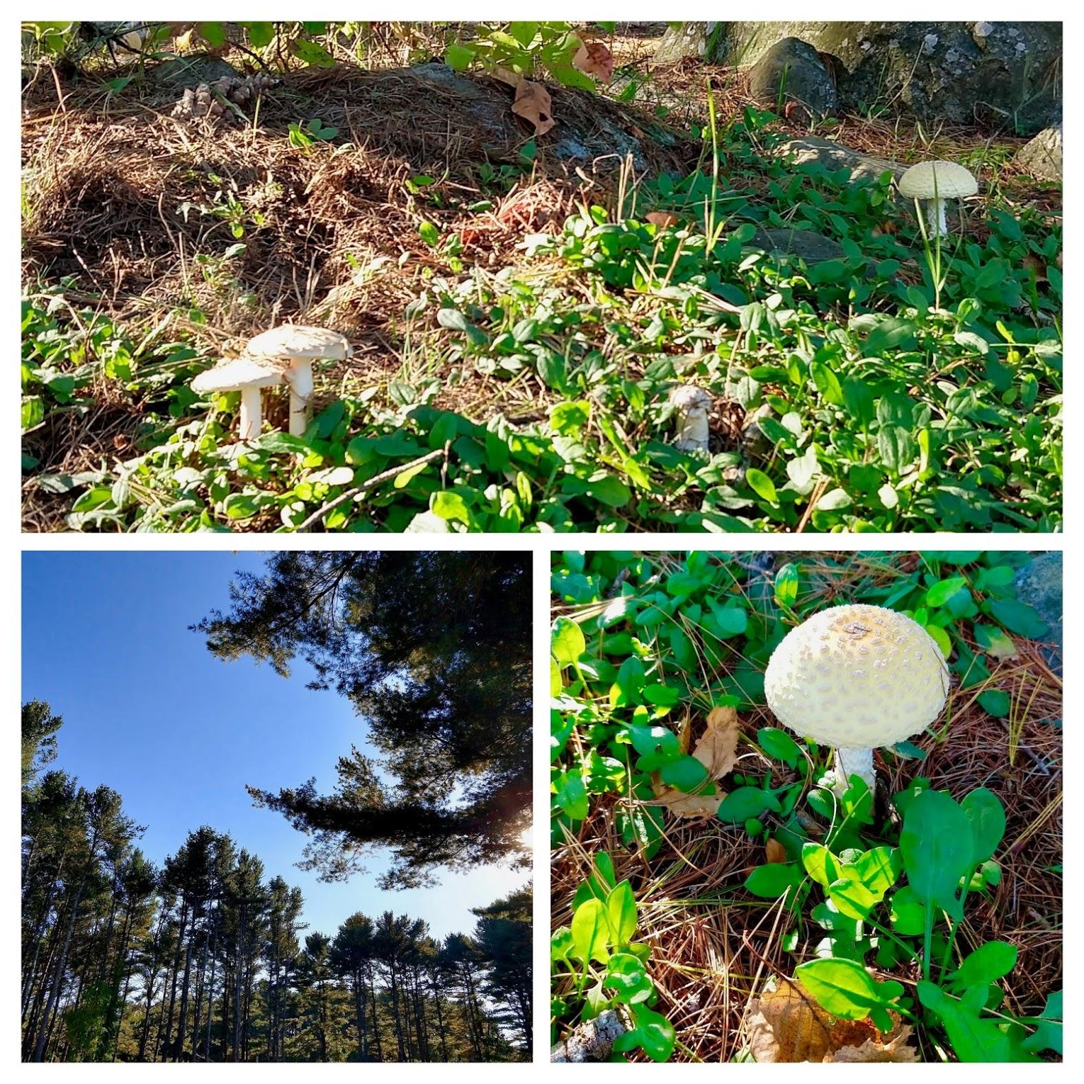 Groen en witte paddenstoelen in Maine